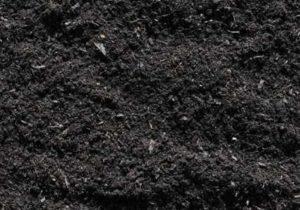 почва чернозем