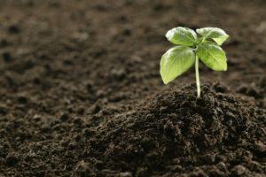купить растительный грунт в москве с доставкой